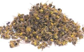 Профилактика и лечение пчелиным подмором