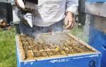 Выбор и изготовление инструменты дымарь для пчел