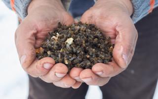 Пчелиный подмор – уникальное средство для мужчин