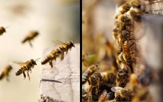 Воровоство в пчеловодстве и методы его протвращения