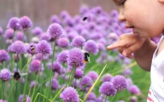 Укус шмеля, последствия, профилактика и лечение