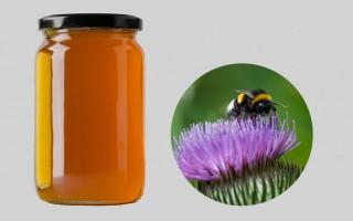 Уникальные лечебные свойства меда из расторопши