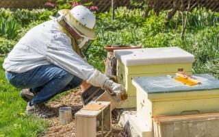 Терминология и понятия пчеловода