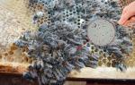 Чем лечить нозематоз у пчел