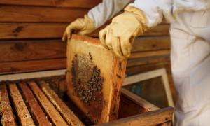 Отводки пчел самыми простыми способами