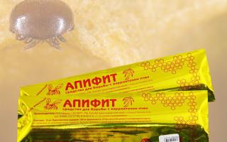 Апифит как эффективное средство от варроатоза