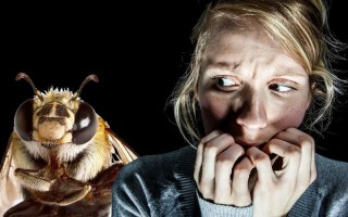 Как перестать боятся ос, пчел и шершней. Борьба с апифобией