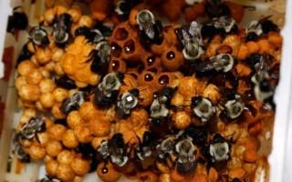 Делают ли шмели мед и в чем его особенности