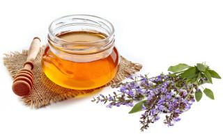 Особенный и полезный шалфейный мед