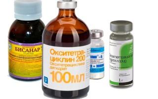 Перечень самых эффективных препаратов для пчел
