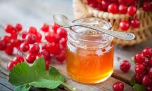 Эффективные рецепты калины с медом