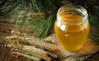 Виды лесного меда и его лечебные свойства