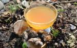 Полезные свойства и противопоказания меда с живицей