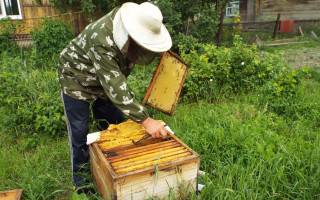 Объединение слабых пчелосемей осенью