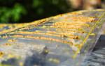 Пчелиный помет (какашки) и его особенности