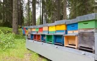 Закон о пчеловодстве