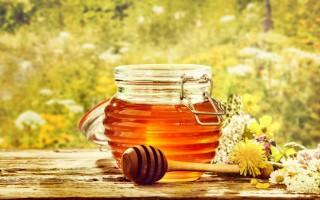 Что собой представляет луговой мед, виды медоносов