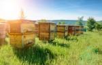 Двухкорпусный метод содержания пчел