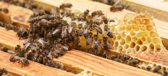 Разновидности и сравнение подкормки пчел