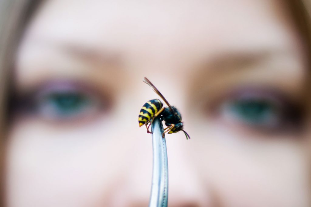 Укус пчелы отек на второй день. Как быстро снять отек после укуса пчелы? Аллергическая реакция на укус пчелы, осы, шершня