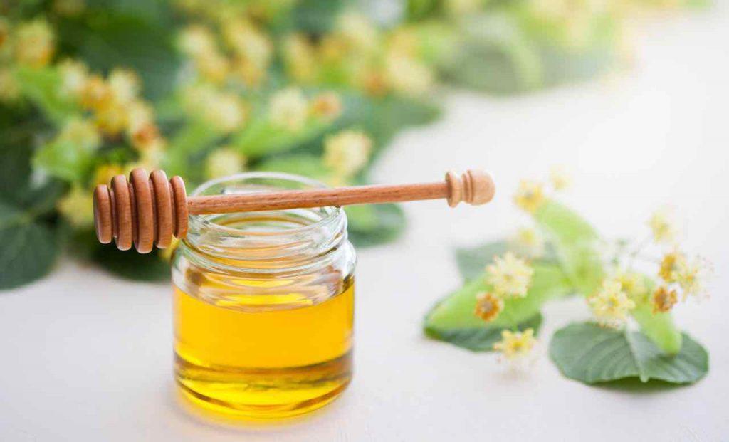 Рецепты алоэ с медом и их применение в народной медицине