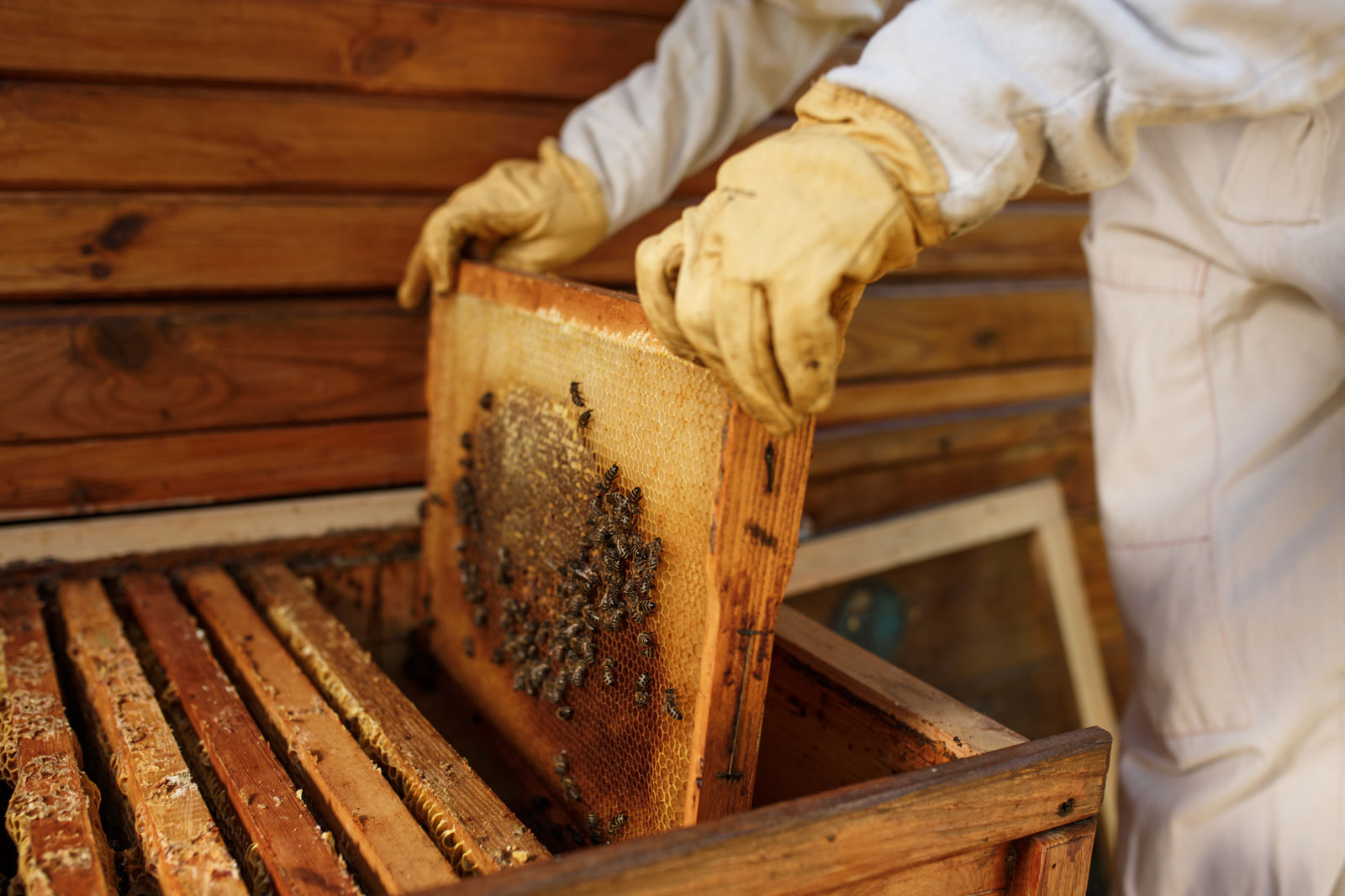 Сколько пчел в мире
