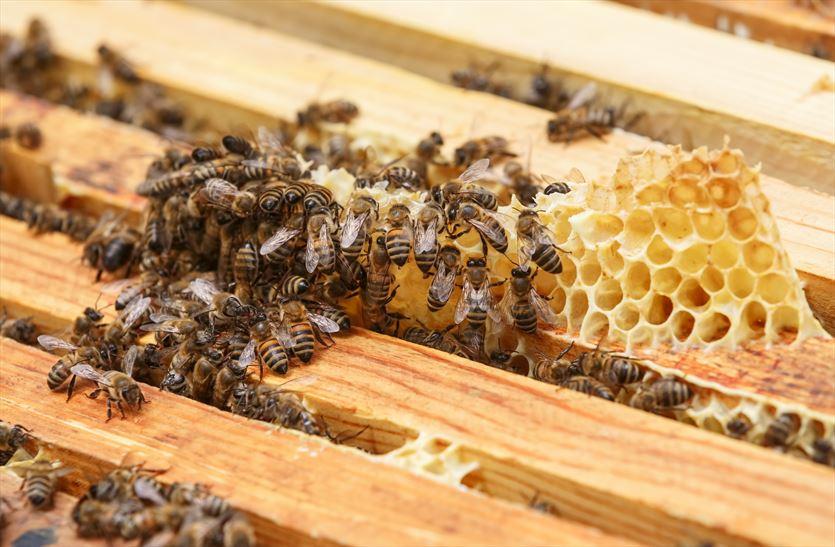 Лекарственные препараты для пчел правильный выбор