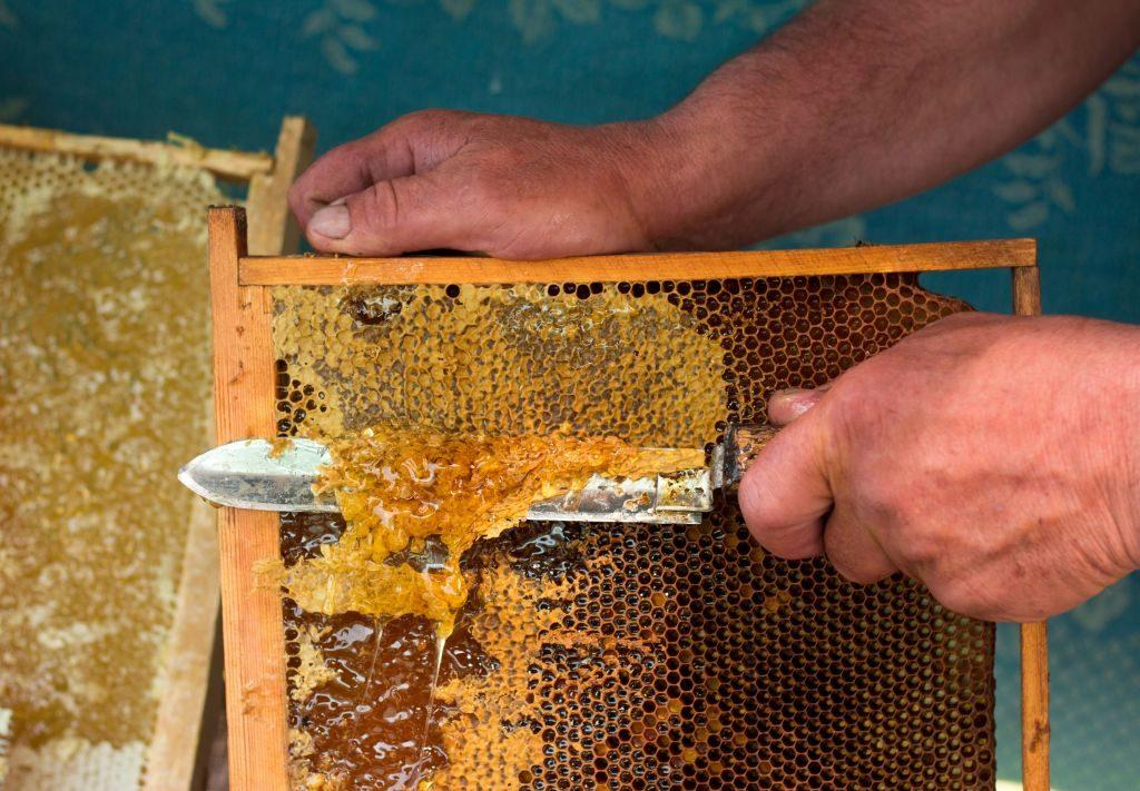 Что можно сделать из сот с медом