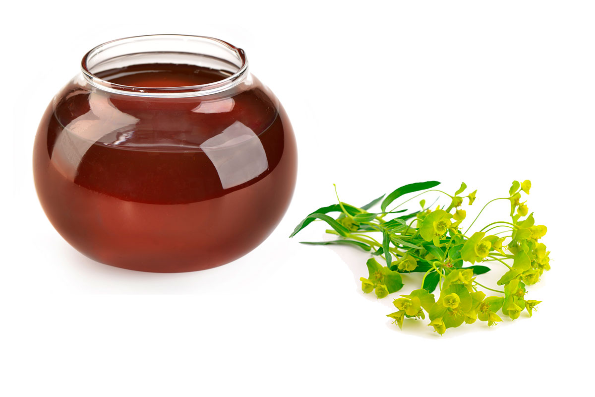 Мед молочай и его полезные свойства и противопоказания
