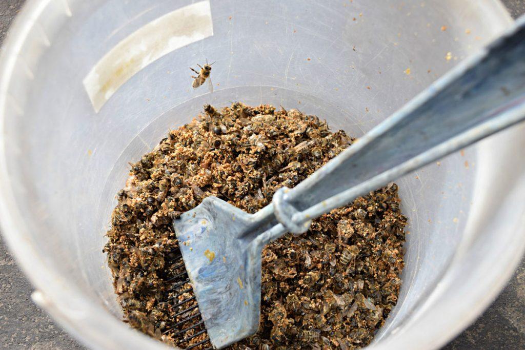 Пчелиный подмор при геморрое