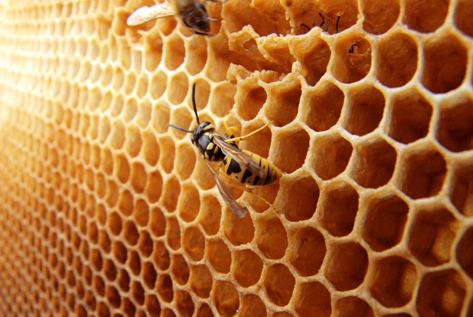 Промышленные пчеловоды