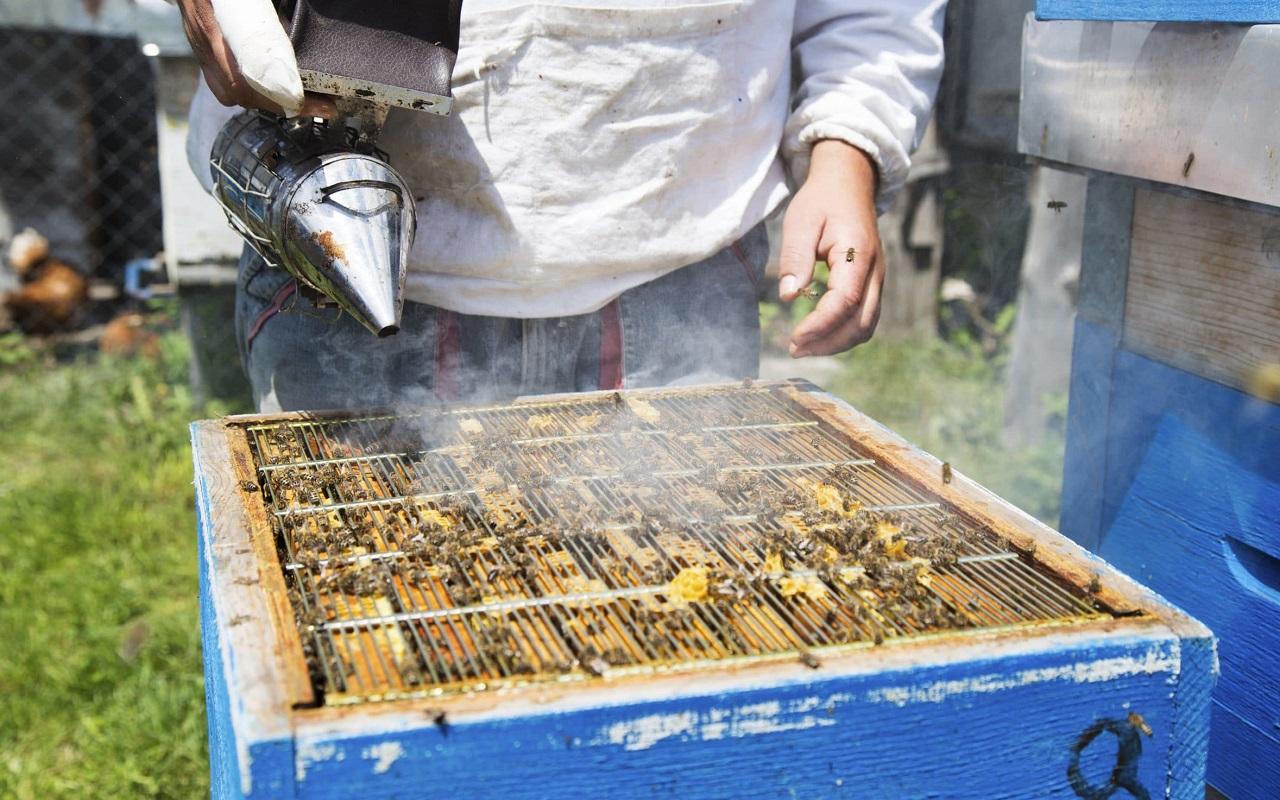 Как выглядит клещ у пчел