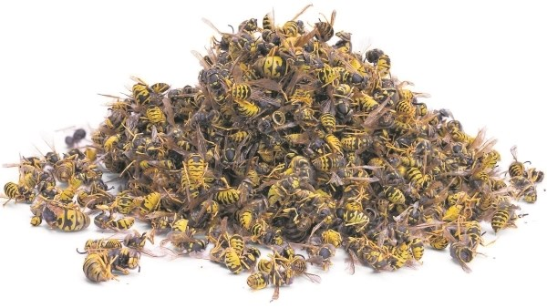 Помор из мертвых пчел для лечения