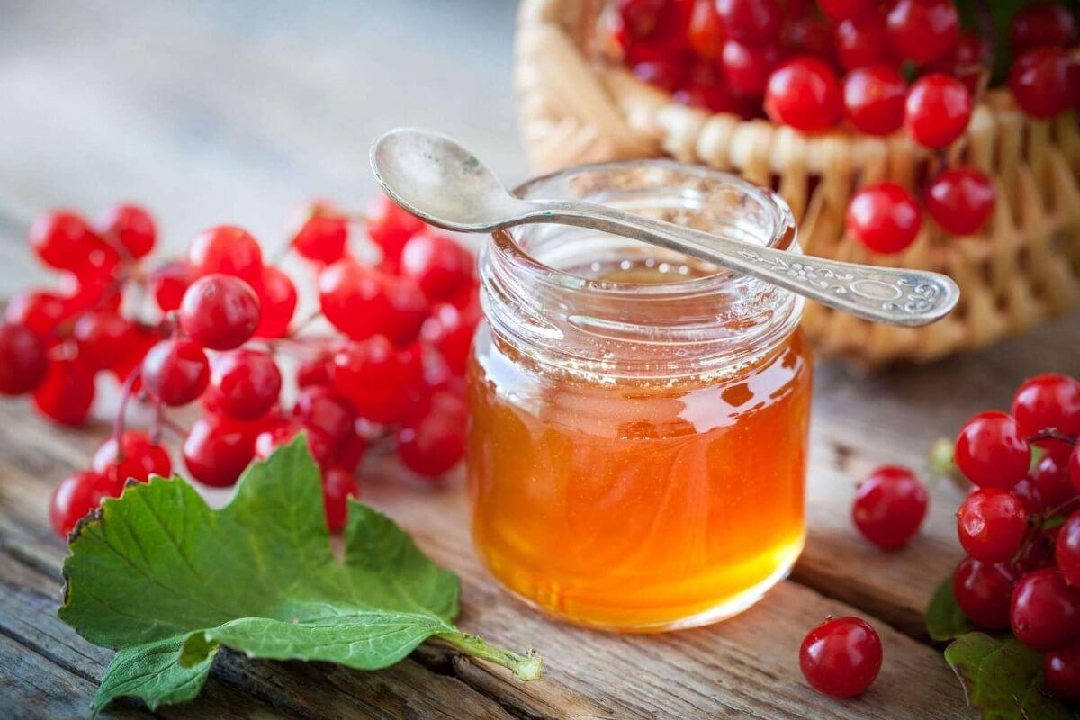 Калина с медом — чем полезна, как приготовить на зиму без варки